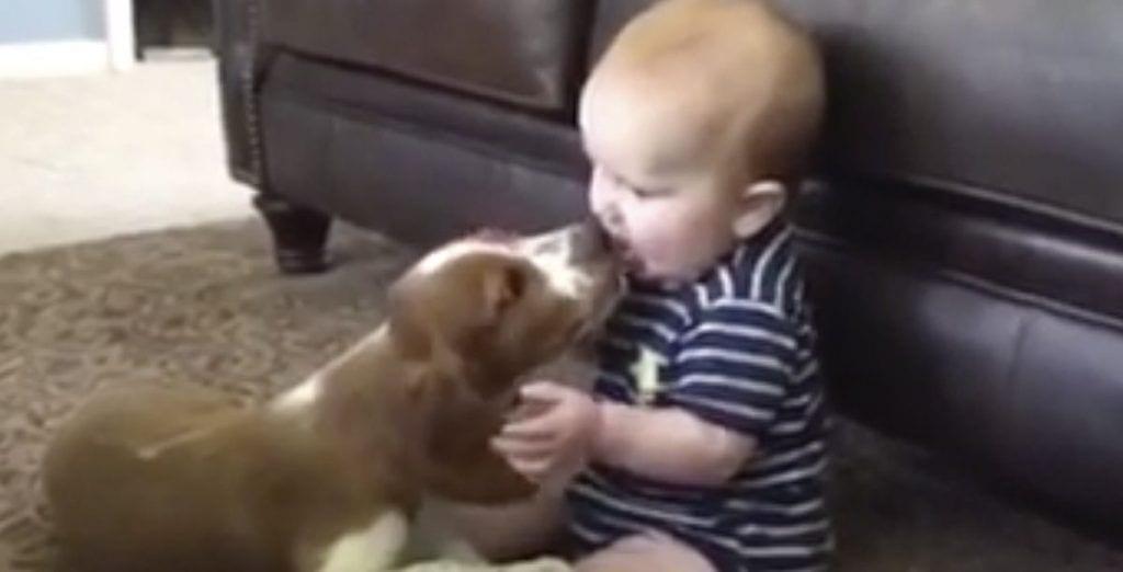 perro bebe portada