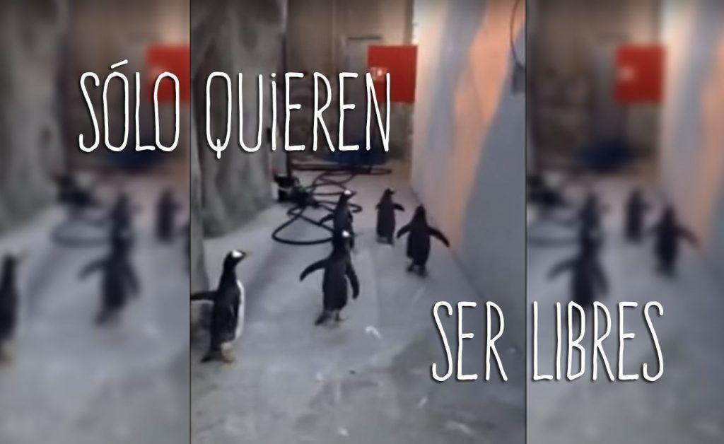 pinguinos destacada