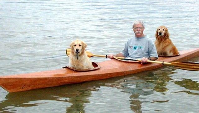 piragua perros destacada