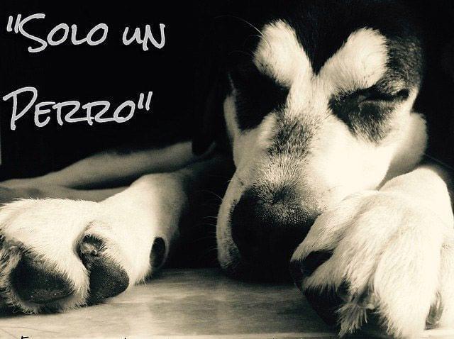 Es Sólo Un Perro El Poema Que Conmueve Al Mundo