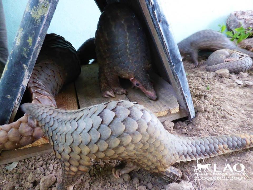 Laos Wildlife Centre Rescate