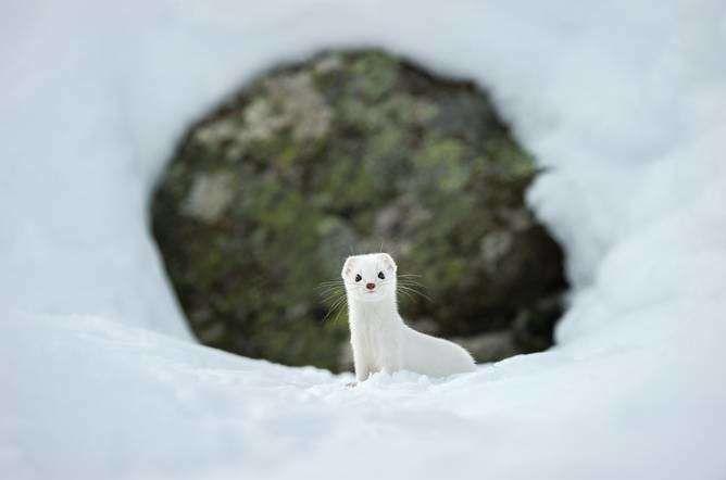 National Geographic - Stefano Unterthiner