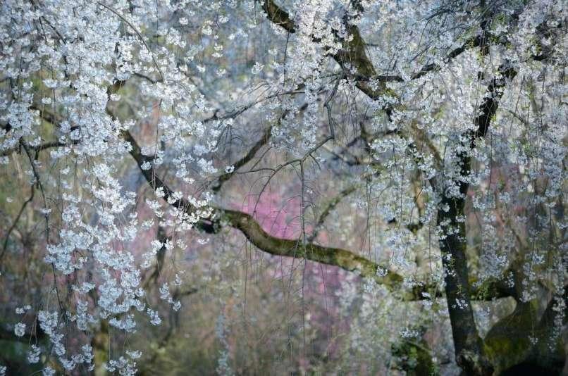 Yourshot - Yukio Miki