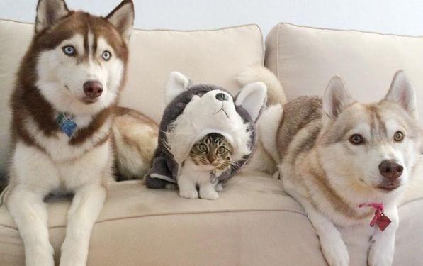 gatos perros
