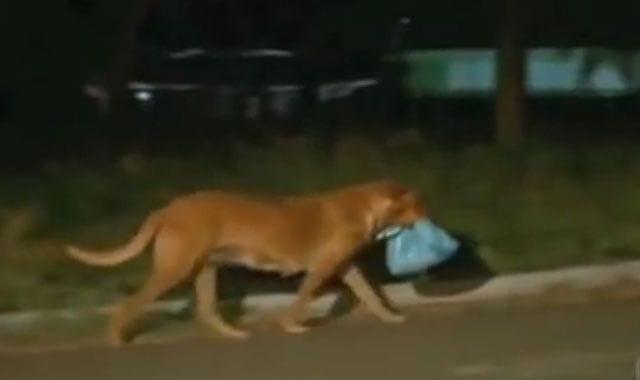 perra alimenta amigos 01