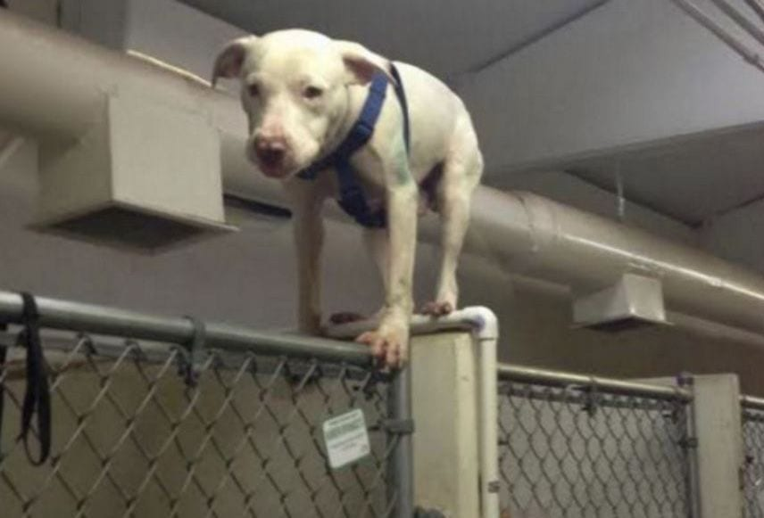 perro escape destacada