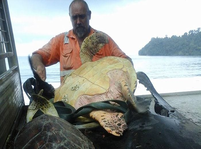 rescate tortugas destacada1
