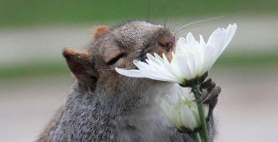 animales oliendo flores dest