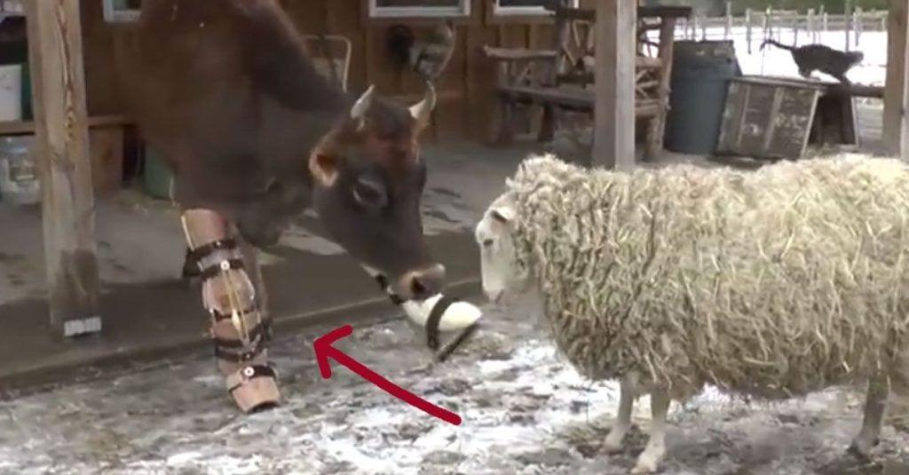 animales rehabilitados1