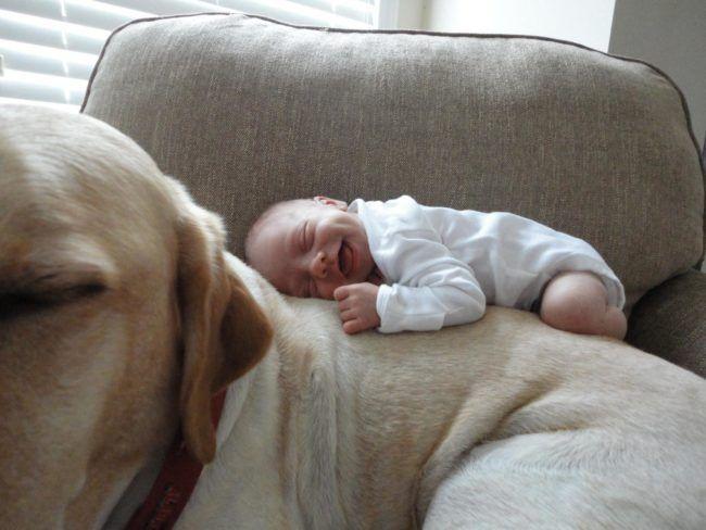 bebes y mascotas 12