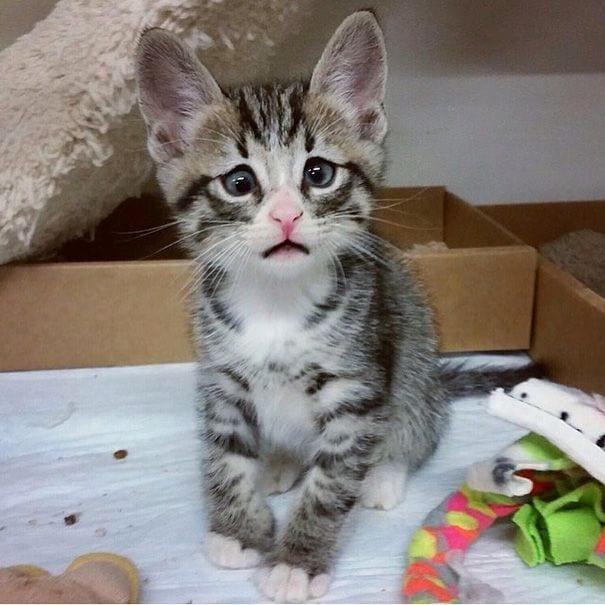 worried_cat_aka_bum