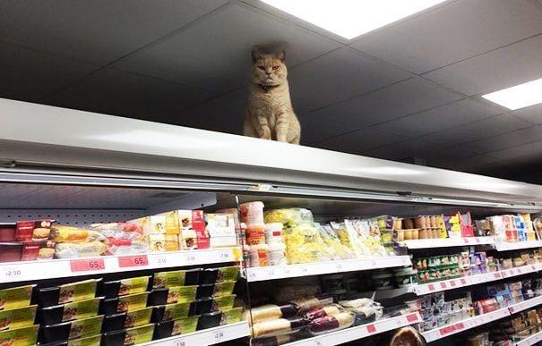 gato supermercado destacada