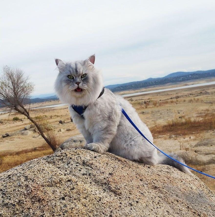 gato-viajero-02