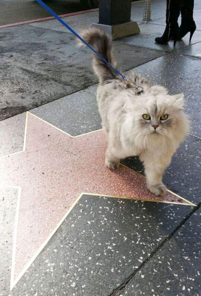 gato-viajero-04