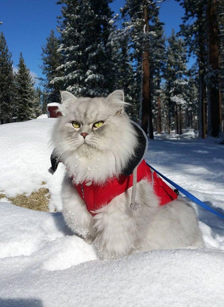 gato-viajero-05