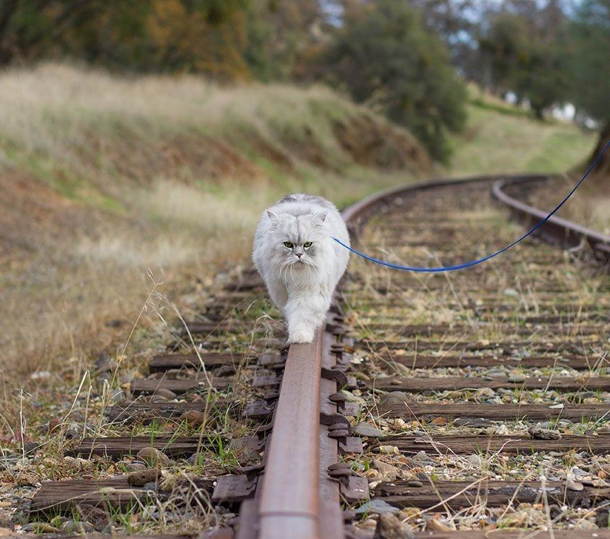 gato-viajero-06