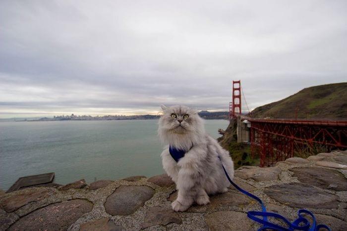 gato viajero 08