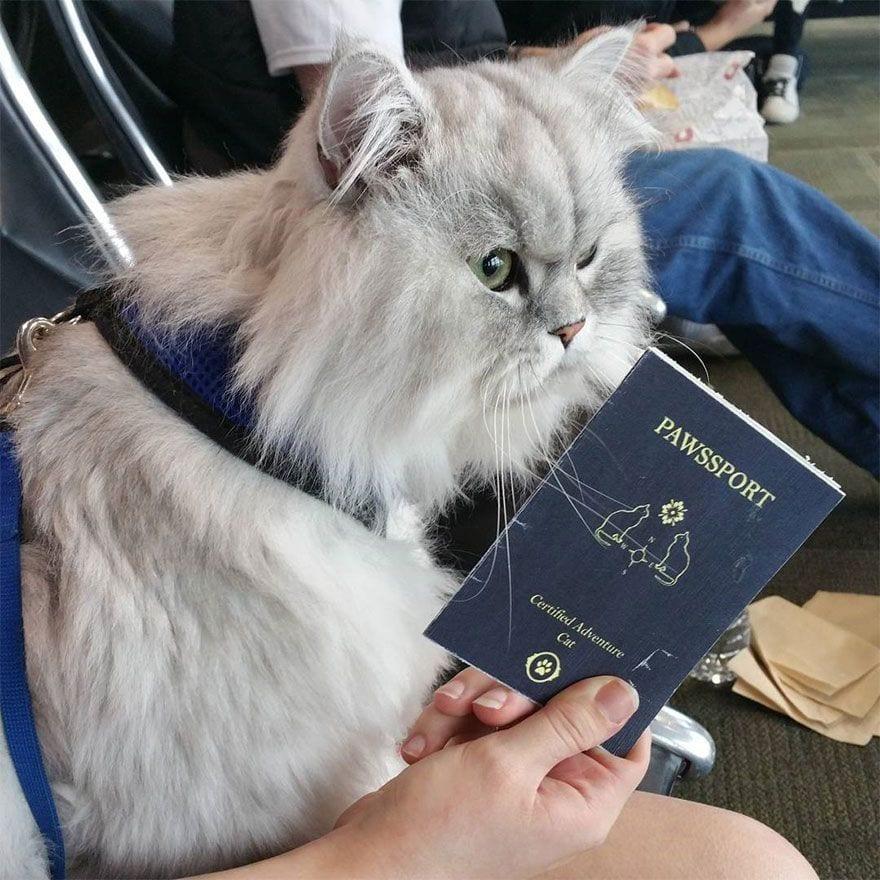 gato-viajero-11