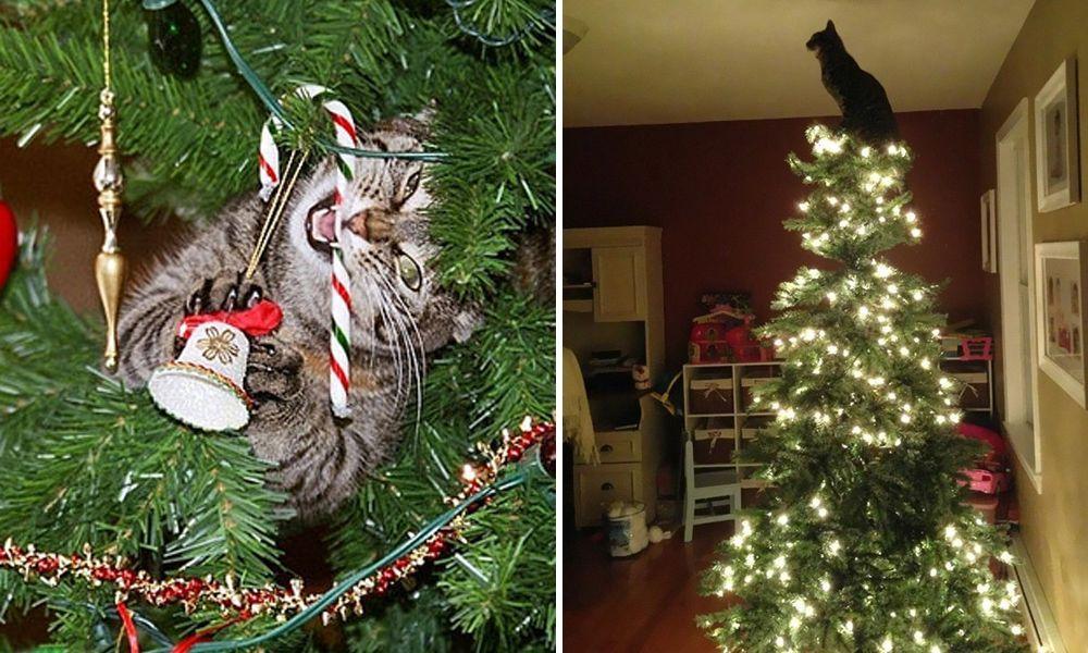 gatos arbol navidad destacada