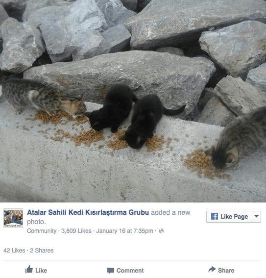 gatos-rescatados2