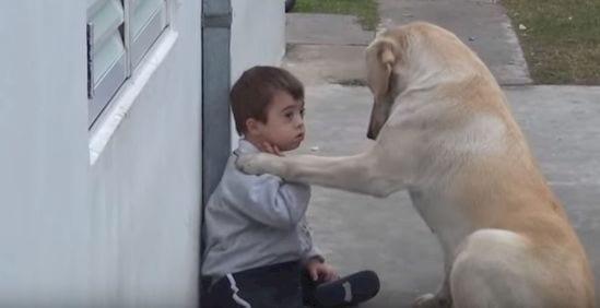 nino-perro-2