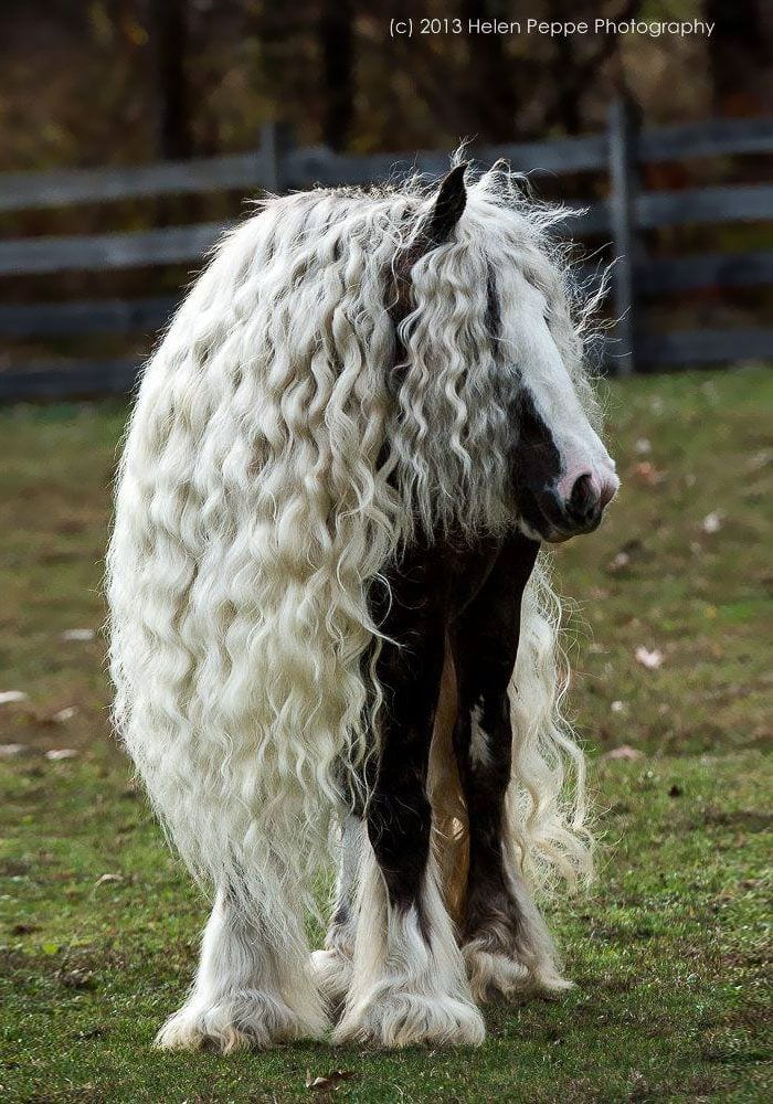 pelo-caballo-02