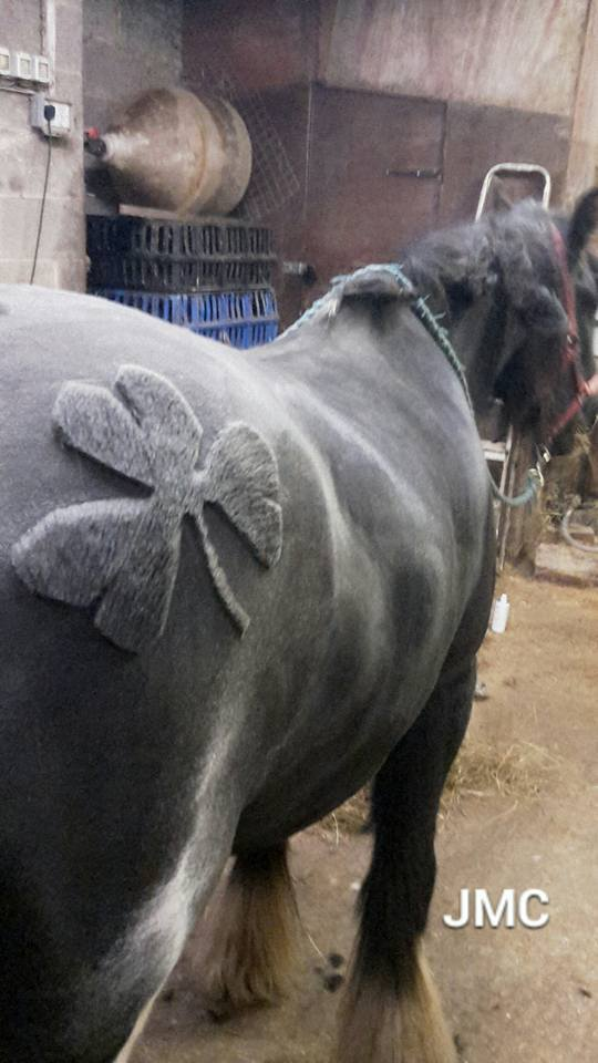 pelo-caballo-06