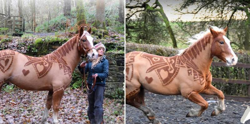 pelo caballo 10