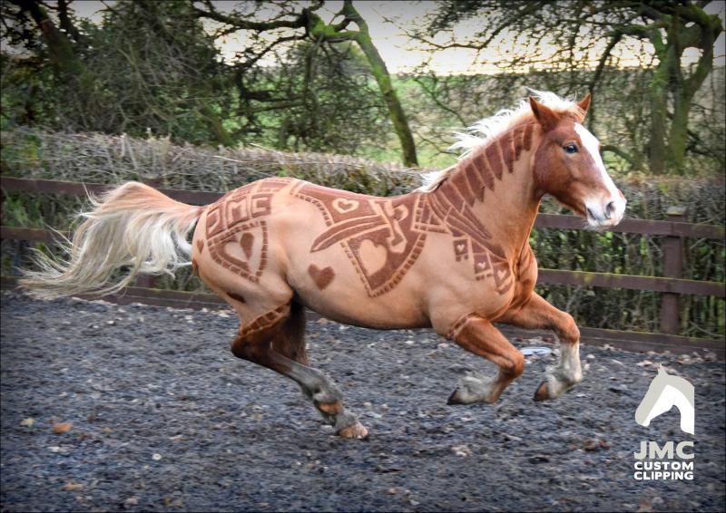 pelo-caballo-11