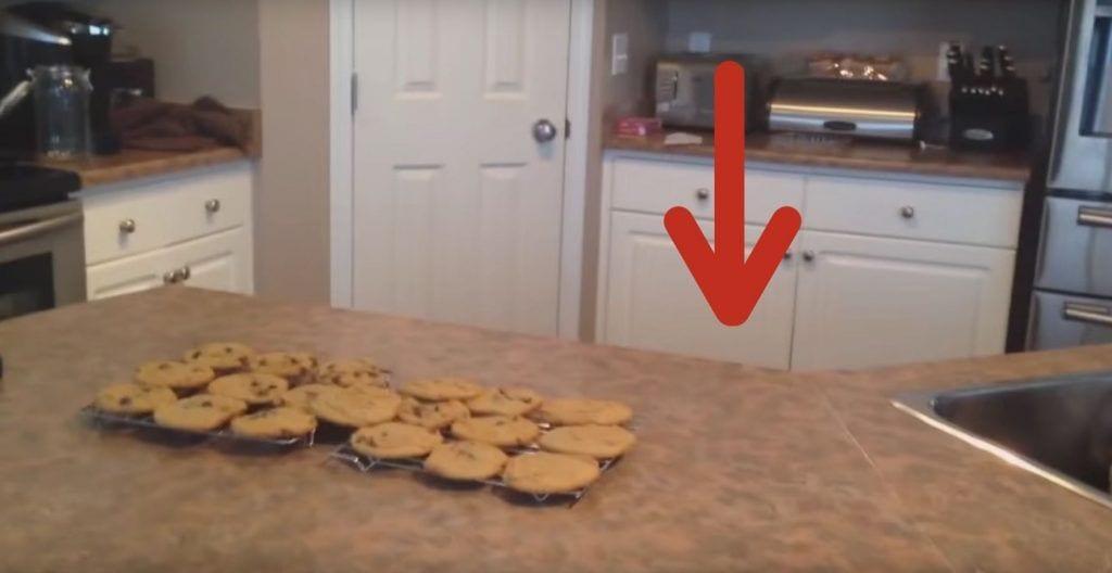 perro galletas encimera
