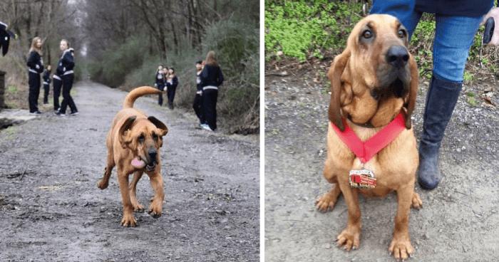 perro maraton 01