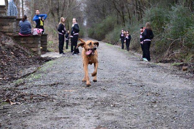 perro-maraton-02