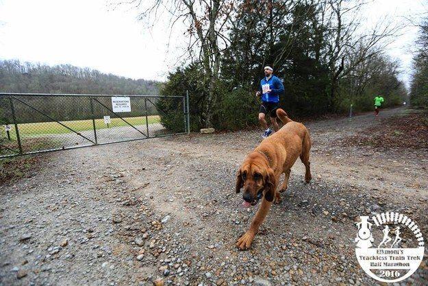perro-maraton-03