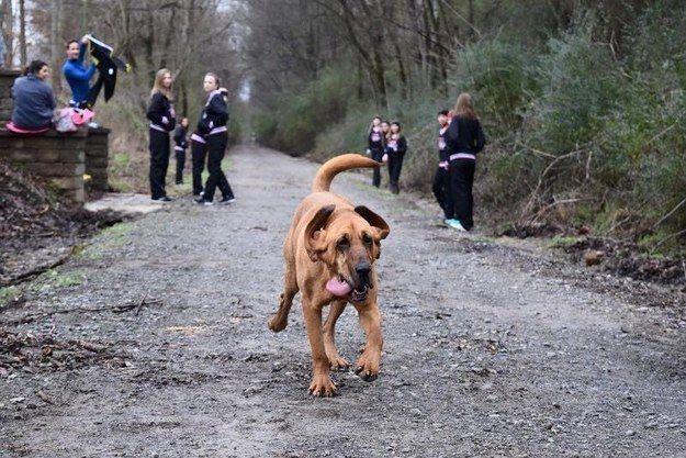 perro-maraton-05