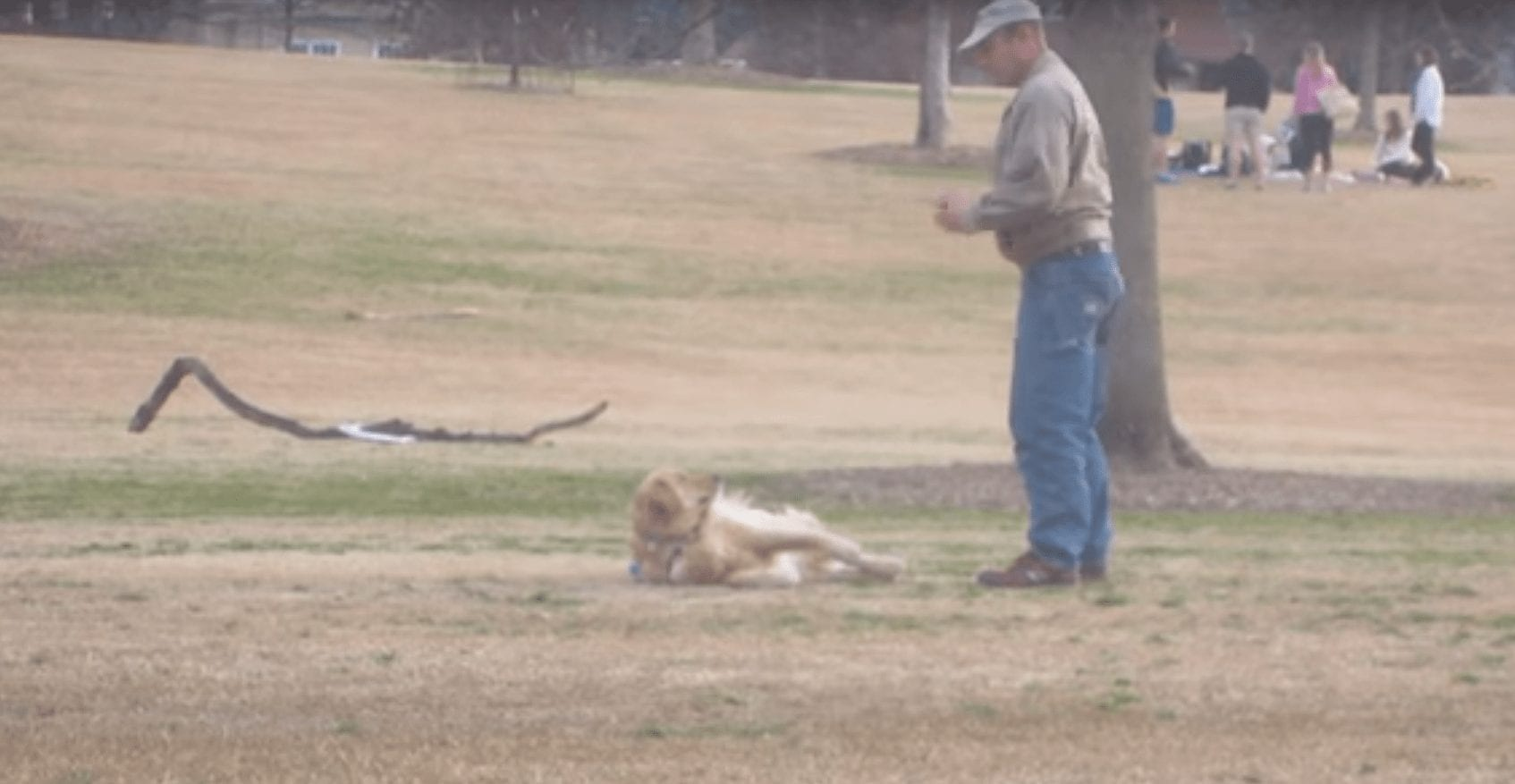 perro parque