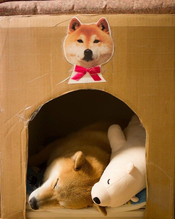 perro-peluche-04