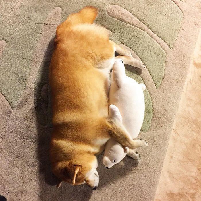 perro-peluche-10