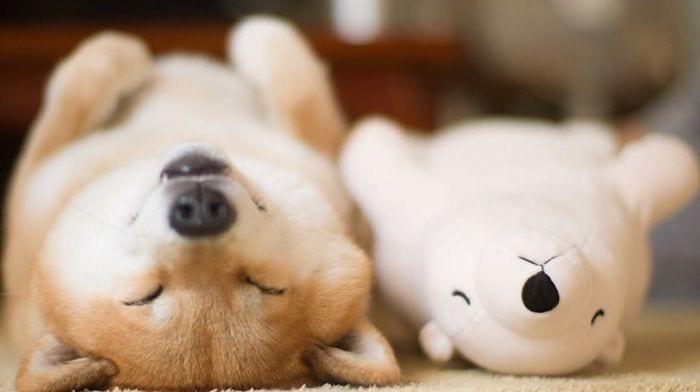 perro peluche destacada