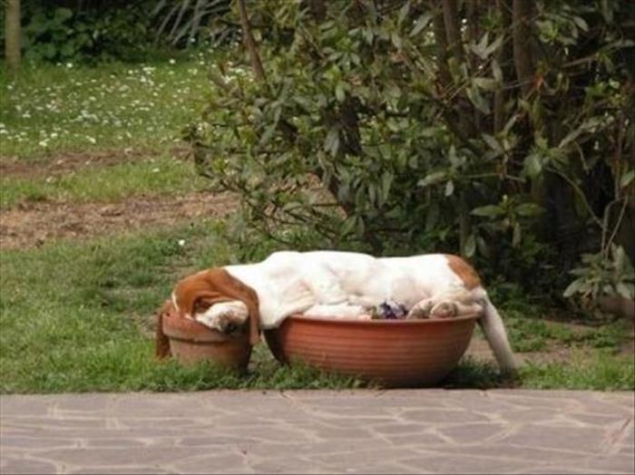 perros camas alternativas 02