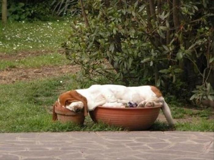 perros-camas-alternativas-02