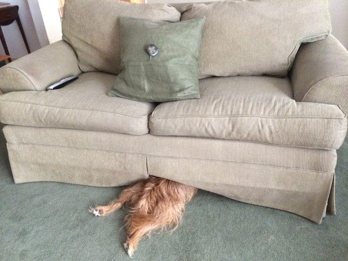 perros-camas-alternativas-05