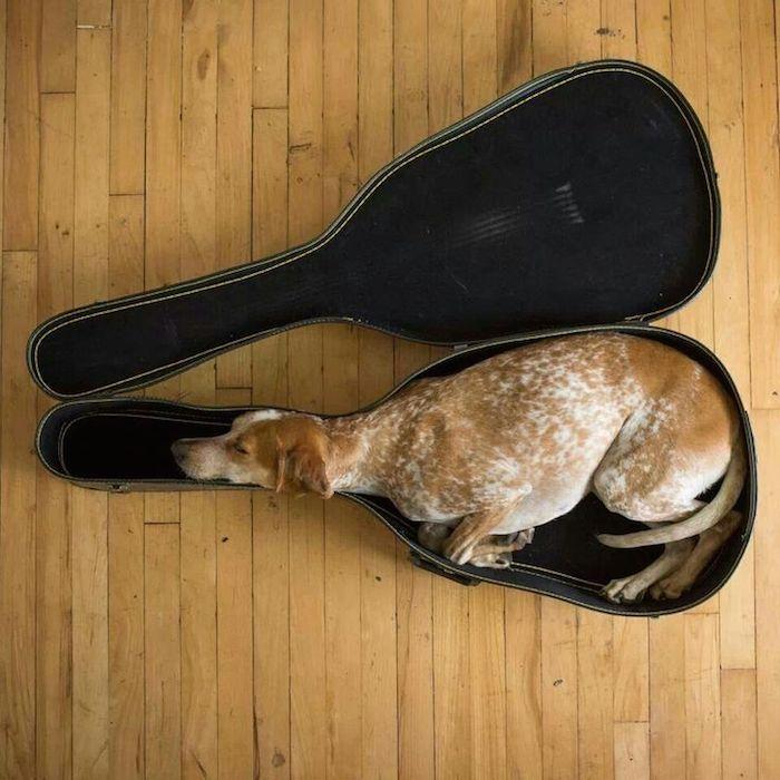 perros-camas-alternativas-11
