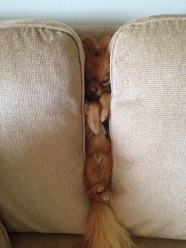 perros-camas-alternativas-12