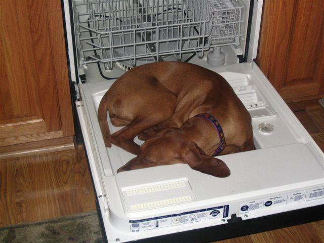 perros-camas-alternativas-13