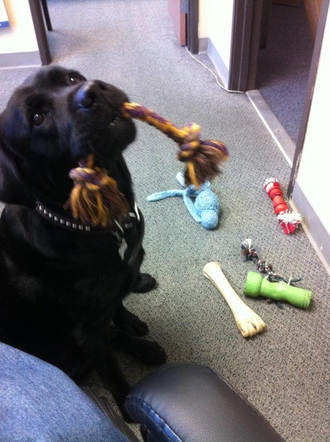 perros-en-la-oficina16