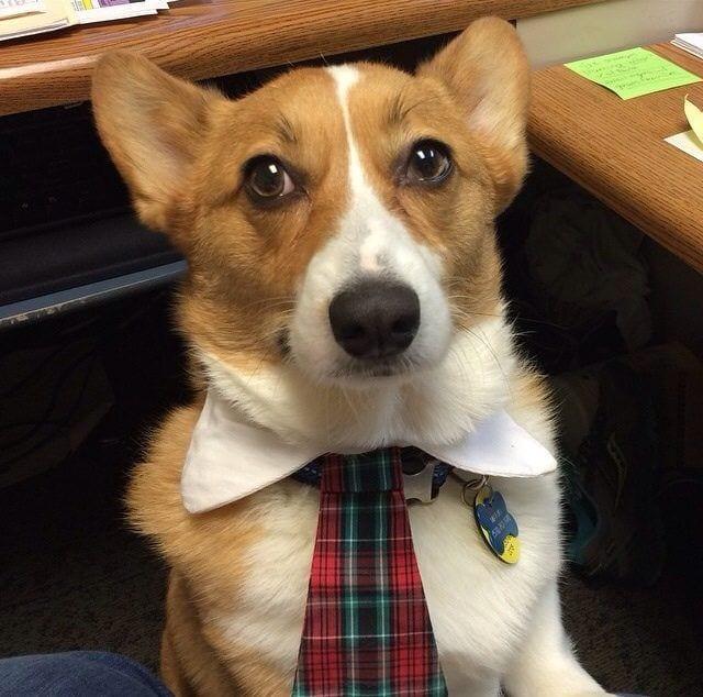 perros-en-la-oficina19