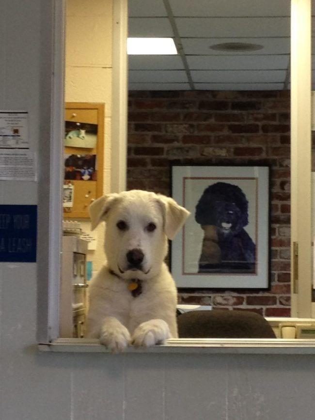 perros-en-la-oficina4