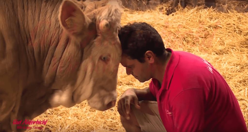 refugio vaca