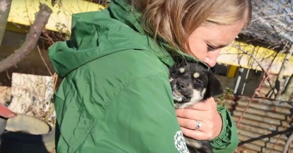 rescate perros granja