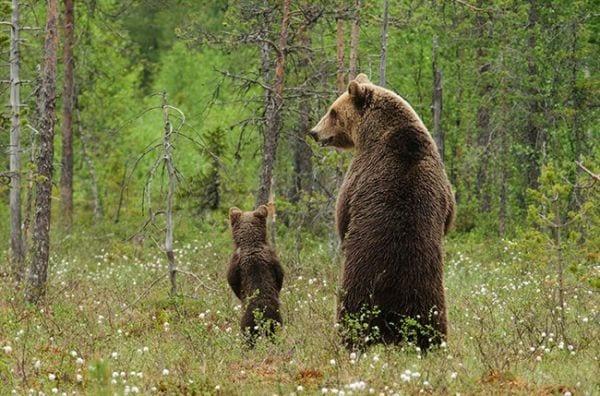 amor-paternal-animales-04